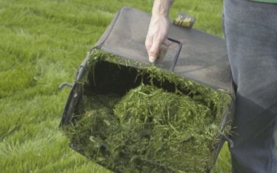 The Grass Clipping Debate: Bag, Mulch, or Leave Them