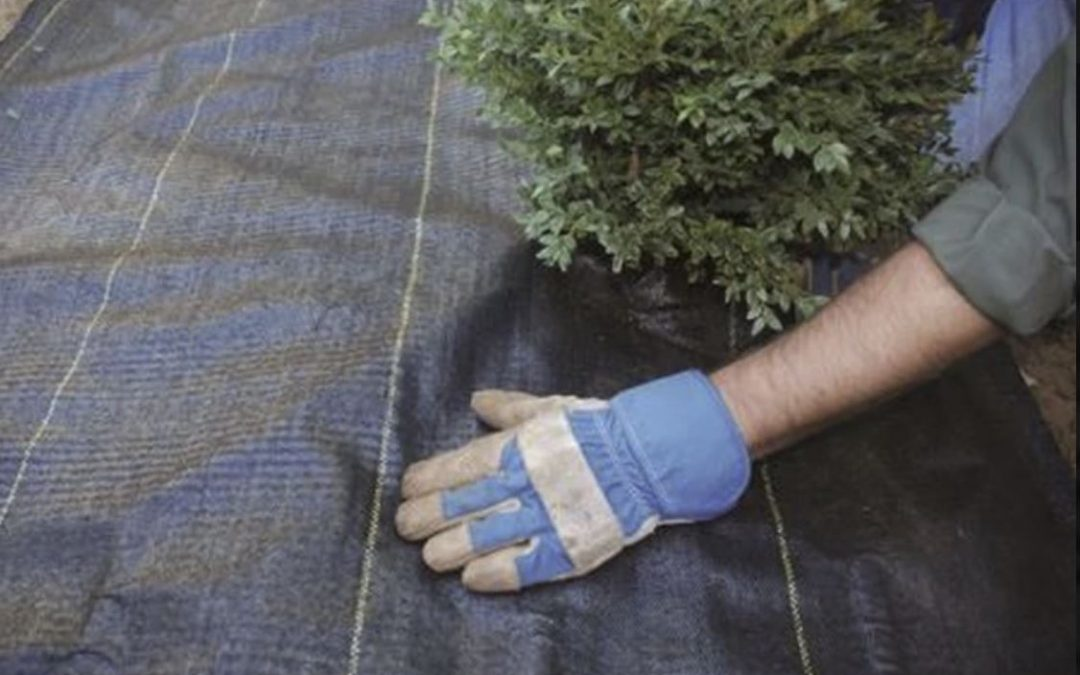 Should You Use Landscape Cloth in a New Garden?