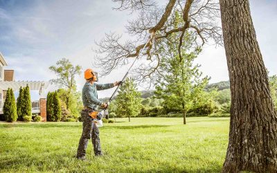 Tree Trimming – The Perfect Texas Winter Garden Chore