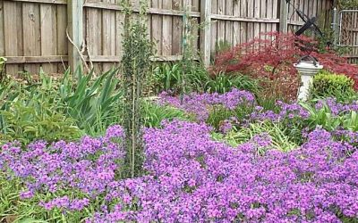 Hearty Ground Covers for Low-Maintenance Gardens in Texas