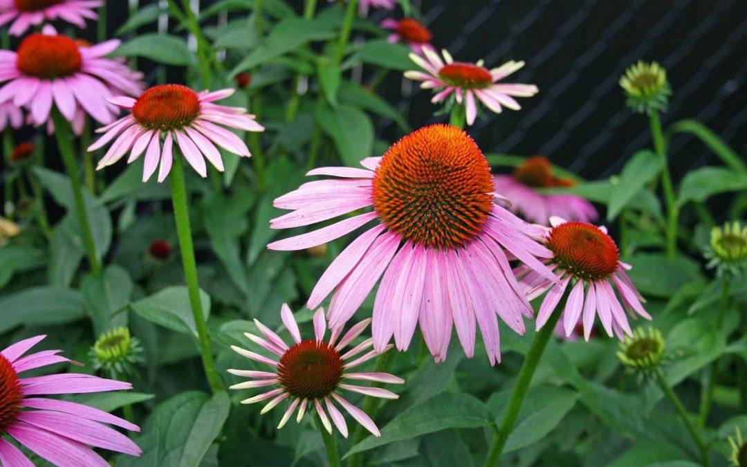 Choose Native Southeast Texas Plants for a Natural Landscape